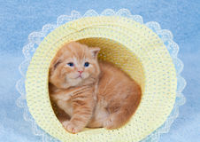 Little cat sitting in the straw hat Royalty Free Stock Image