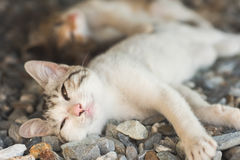 Little cat sleep Stock Images