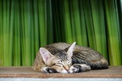 Little cat sleep on the wooden plank. Doesn`t care anything Royalty Free Stock Images