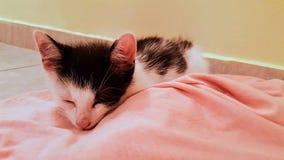 Cat. Little cat sleeping like a baby Stock Photos