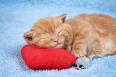 Little cat sleeping on the pillow Stock Photo