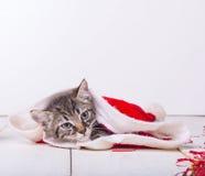 Little cat sleeping Royalty Free Stock Image