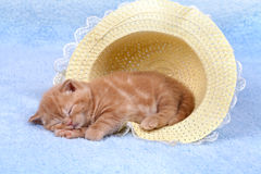 Little cat sleeping in the straw hat Royalty Free Stock Photos