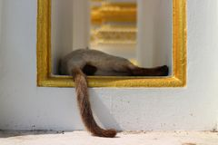 The little cat sleeping, the tail appeared from the square. Little cat sleeping tail appeared square stock photos