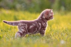 Little cat standing in green grass side view stock photos