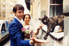 Little cat steps to groom's hand from a windowsill Stock Photo