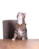 Little cat on table Stock Images