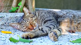 Little CAT in Taiwan City. Composed Sleep all day unruffled royalty free stock images