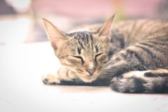 A little cat taking a nap royalty free stock photos