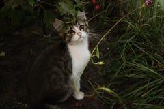 Little cat Stock Photo