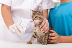 Little cat at the veterinary - getting a vaccine Stock Photo