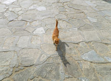 Little cat walking in the sunlight with amazing shadow on the stone pave, Mykonos island Stock Photos