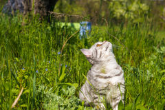 Little cat walking in the tall grass. Stock Photo