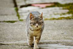 A little cat walking in the yard. The little cat slowly walked through her yard, went on tour of her own territory royalty free stock photo