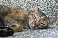 The little cat was lying in the corner of the building. The little tabby sleeping stare Royalty Free Stock Photo