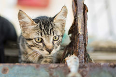 Little Cat Watching Fish. On Abandoned Old Rusty Ship Royalty Free Stock Photo