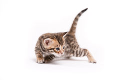 Little cat on white background Royalty Free Stock Image