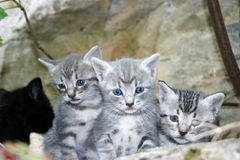 Little cats royalty free stock photo