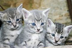 Little cats Royalty Free Stock Images
