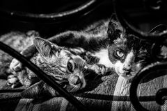Little cats. Two pet cats resting on the chair Royalty Free Stock Photo