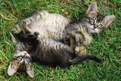 Little cats. On a green grass stock image