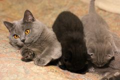 Little cats on the couch stock photography