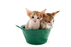 Little cats in green bucket Royalty Free Stock Photography