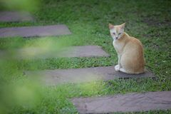 Little cats royalty free stock photography