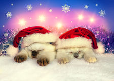Little cats wearing Santa hats Fotografie Stock Libere da Diritti