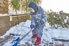 Little caucasian boy shovels snow in the yard with beautiful snowy rose bushes. Child with shovel plays outdoors in winter. Childr. En hepling, family duties royalty free stock image