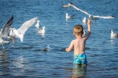 Boy feeding seagulls Royalty Free Stock Photo