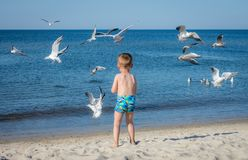 Boy feeding seagulls Stock Photos