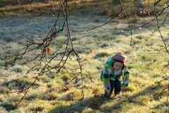 Boy playing in the park in autumn royalty free stock photos