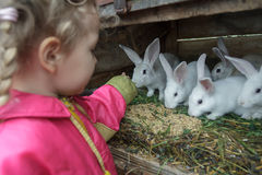 Little Caucasian fair haired girl feeding group of domestic rabbits with fresh grass Royalty Free Stock Image