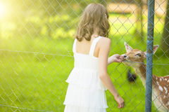 Little Caucasian Girl Feeding Roe Behind Fence Royalty Free Stock Photo