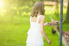 Little Caucasian Girl Feeding Roe Behind Fence Royalty Free Stock Photo