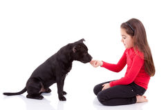 Little caucasian girl playing with her pet Stock Photo