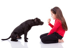 Little caucasian girl playing with her pet Royalty Free Stock Photo