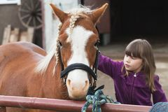 Little Caucasian girl strokes brown horse. With braided mane, photo with selective focus Royalty Free Stock Photo