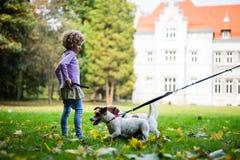 Little caucasian kids running around the autumn park with the dogs. Little caucasian kids running around autumn park with the dogs royalty free stock image