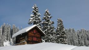 Little chalet and firs Stock Photography