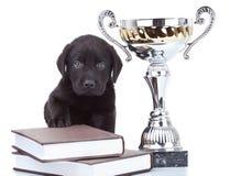 Little champion Stock Photos