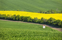 Little chapel and colored fields in spring time Stock Photography