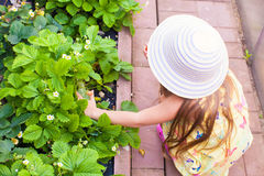 Little charming girl in greenhouse harvests: Royalty Free Stock Photos