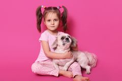 Little charming girl sits on floor in photo studio against pink wall with her favourite pet. Cute female child with white royalty free stock photo