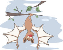 Little cheerful bat  Cartoon Stock Images