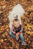 Little cheerful boy sits next to samoyed dog and plays with him stock image