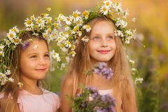 Little cheerful girls in chamomile wreaths in summer in the field royalty free stock photo