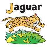 Little cheetah or jaguar for ABC. Alphabet J. Children  illustration of little funny jumping cheetah or jaguar. Children  illustration. Alphabet J Royalty Free Stock Images