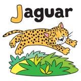 Little cheetah or jaguar for ABC. Alphabet J Royalty Free Stock Images